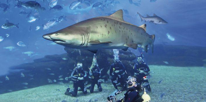 Bucear con Tiburones en Mallorca