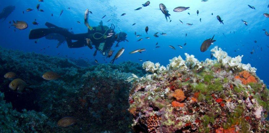 Inmersión única de buceo en Mallorca