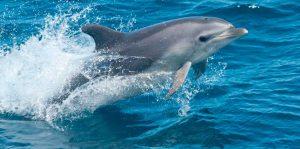 Avistamiento de delfines Mallorca