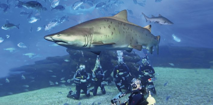 Diving with Sharks Majorca