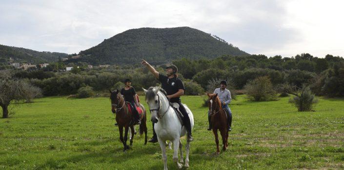 Horses in Majorca